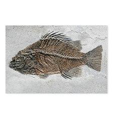 Prehistoric perch fossil - Postcards (Pk of 8)