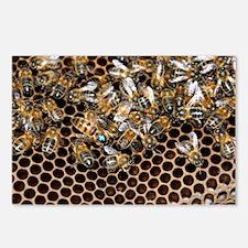 Queen bee with worker bees - Postcards (Pk of 8)