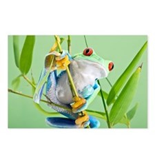 Red-eyed tree frog - Postcards (Pk of 8)