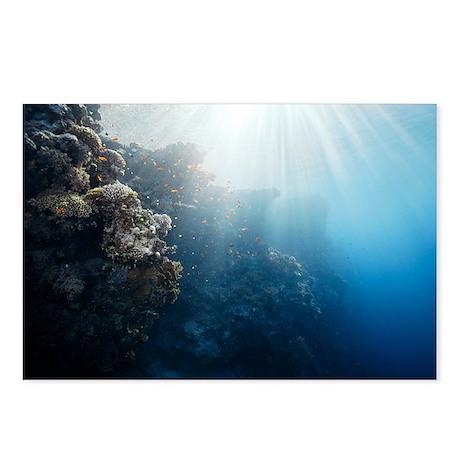 Reef scene - Postcards (Pk of 8)
