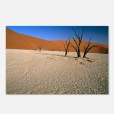 Sand dunes - Postcards (Pk of 8)
