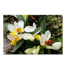 Shrubby milkwort (Polygala chamaebuxus) - Postcard