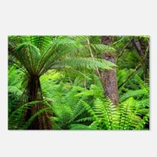 Temperate rainforest - Postcards (Pk of 8)
