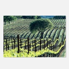 Vineyard - Postcards (Pk of 8)