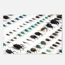 Beetle collection - Postcards (Pk of 8)
