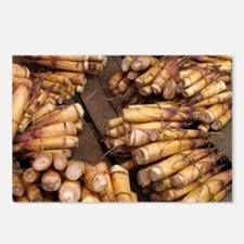 Fresh bamboo shoots - Postcards (Pk of 8)