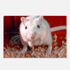 Laboratory gerbil - Postcards (Pk of 8)