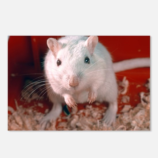 Laboratory gerbil - Postcards (Pk of 8)