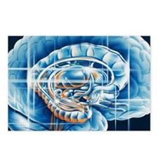 Brain limbic system - Postcards (Pk of 8)