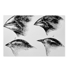 Diagram of beaks of Galapagos finches by Darwin -