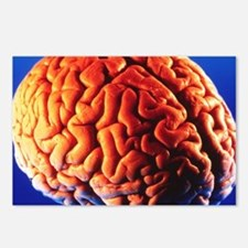 Human brain - Postcards (Pk of 8)