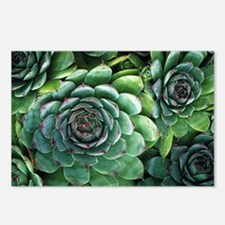 'Hens and chicks' succulents - Postcards (Pk of 8)