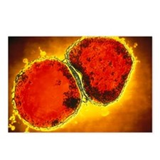 Neisseria meningitidis bacteria - Postcards (Pk of