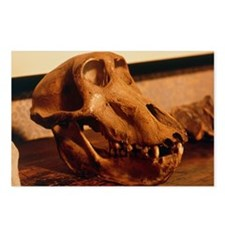The skull of an ape at Darwin's house - Postcards