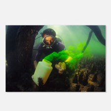 Underwater research - Postcards (Pk of 8)