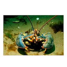 American lobster - Postcards (Pk of 8)