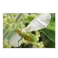 Aphid in flight - Postcards (Pk of 8)