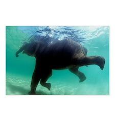 Asian elephant (Elephas maximus) - Postcards (Pk o