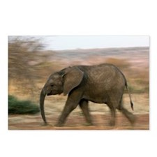 African elephant - Postcards (Pk of 8)