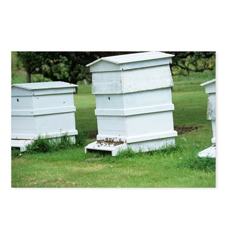 Beehive - Postcards (Pk of 8)