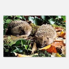 Baby hedgehogs - Postcards (Pk of 8)