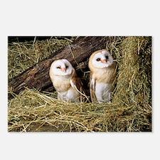 Barn owls - Postcards (Pk of 8)