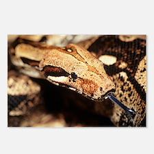Boa constrictor - Postcards (Pk of 8)