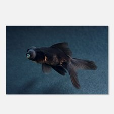 Black Moor ornamental fish - Postcards (Pk of 8)
