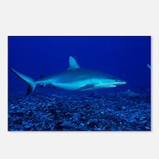 Bull shark - Postcards (Pk of 8)