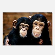 Chimpanzees - Postcards (Pk of 8)