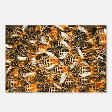 Close-up of honey bees (Apis mellifera) - Postcard