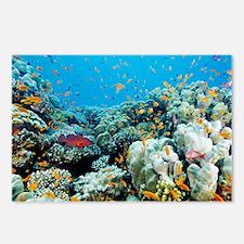 Coral reef - Postcards (Pk of 8)