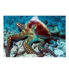 Day octopus - Postcards (Pk of 8)