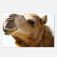 Dromedary camel - Postcards (Pk of 8)