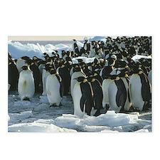 Emperor penguins - Postcards (Pk of 8)