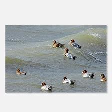 Eurasian wigeons - Postcards (Pk of 8)