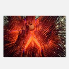 False fire urchin - Postcards (Pk of 8)