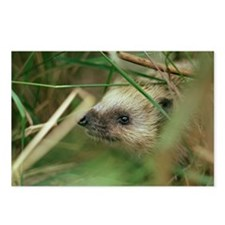European hedgehog - Postcards (Pk of 8)