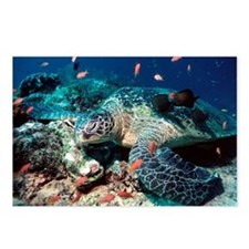 Green turtle - Postcards (Pk of 8)
