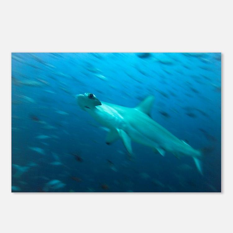 Hammerhead shark - Postcards (Pk of 8)