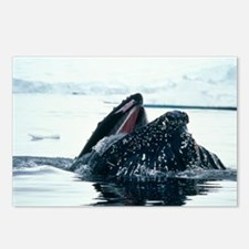 Humpback whale - Postcards (Pk of 8)