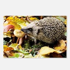 Hedgehog - Postcards (Pk of 8)