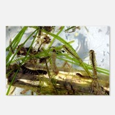 Insect larvae - Postcards (Pk of 8)