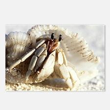 Juvenile land hermit crab - Postcards (Pk of 8)