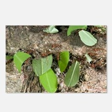 Leafcutter ants carrying leaves - Postcards (Pk of