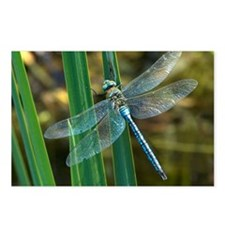 Male emperor dragonfly - Postcards (Pk of 8)