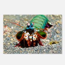 Mantis shrimp - Postcards (Pk of 8)