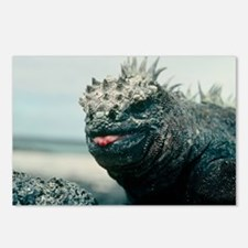 Marine iguana - Postcards (Pk of 8)