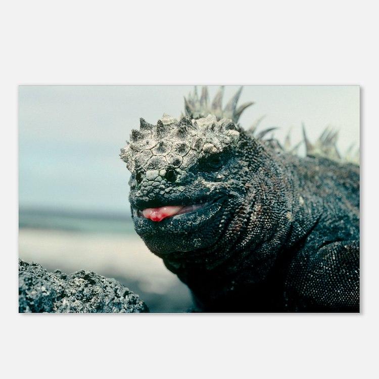 Marine iguana - Postcards (Pk of 8)