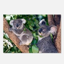 Mother koala and young - Postcards (Pk of 8)